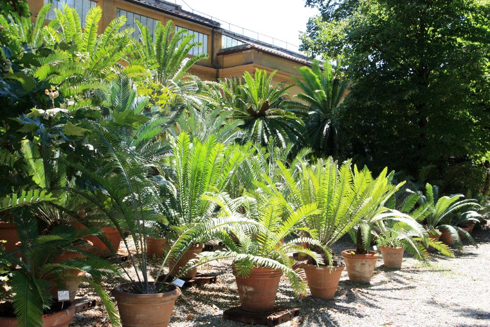 Ботанический сад в итальянской Флоренции. Учитывая особенности климата на Апеннинском полуострове, многим тропическим растениям в летний период теплицы не нужны.