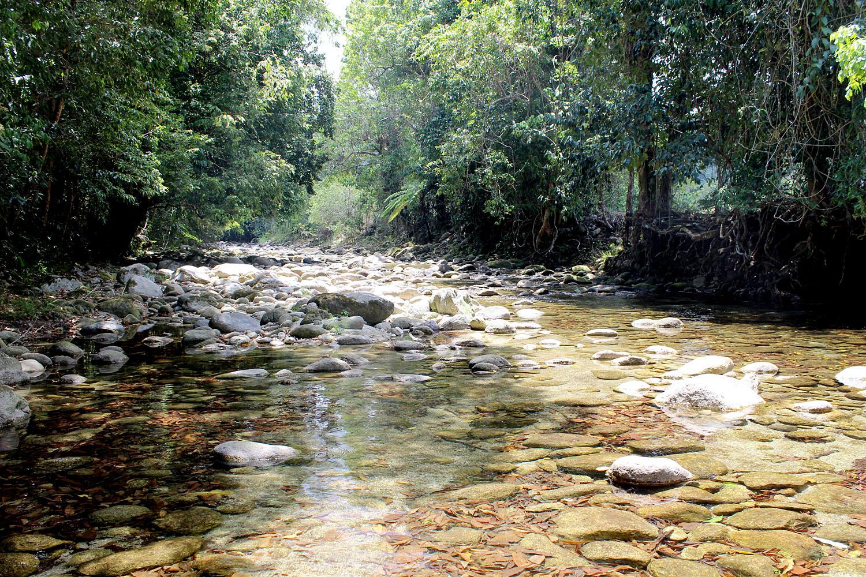Небольшая речка Harvey creek на восточном побережье Австралии - место обитания голубоглазки Псевдомугил сигнифер (Pseudomugil signifier).