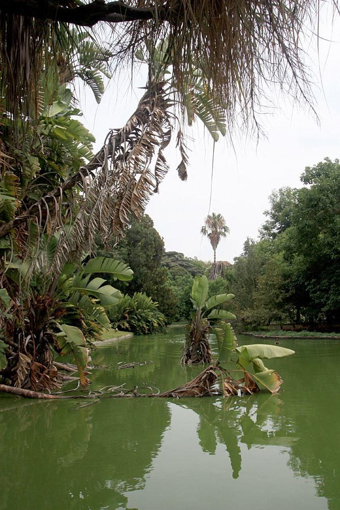 Лиссабонский ботанический сад (Jardim Botanico Tropical, Lisboa)