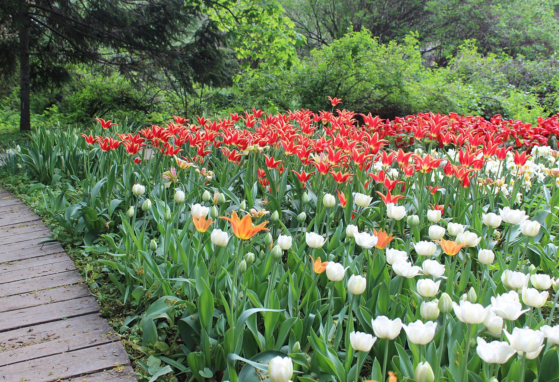 """Начало мая - самое подходящее время для посещения ботанического сада """"Аптекарский огород"""" на проспекте Мира в Москве. Тут всегда огромное количество разнообразных первоцветов."""