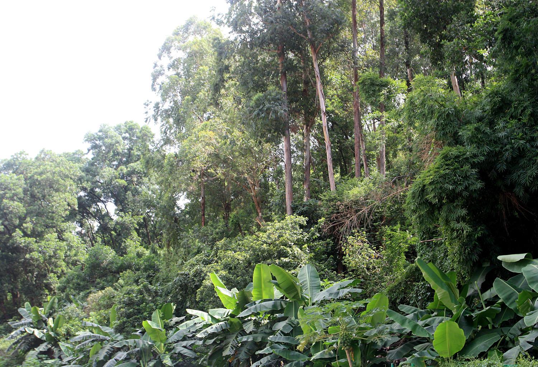 Несмотря на то, что китайский Шэньчжэнь (Shenzhen) является крупным мегаполисом с численностью населения более 12 млн. человек, он находится в тропической климатической зоне и окружен дождевыми лесами.