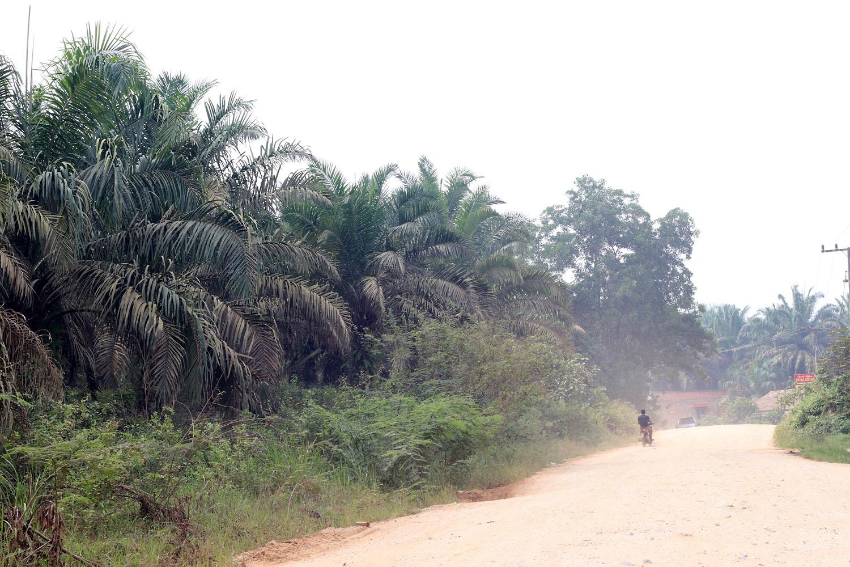 За исключением отдельных национальных парков территория провинции Риау почти вся отдана под сельское хозяйство, львиную долю которого составляет выращивание масличных пальм.