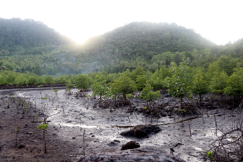 Sabang по индонезийски, Weh Island по английски... Все это названия небольшого острова на севере Суматры. В основном сюда едут туристы ради тихого отдыха с дайвингом и снорклингом. При этом большая часть берегов острова поросла глухими зарослями мангровых деревьев.