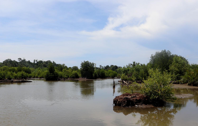 Река на севере острова Суматра, название которой выяснить не удалось. В устье реки удалось обнаружить популярную среди аквариумистов аквариумную рыбку - Оризиаса яванского (Oryzias javanicus).