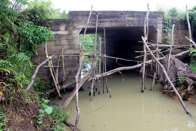Мост через небольшой приток реки Indragiri River в индонезийской провинции Риау (остров Суматра). В этих мутных водах нам удалось поймать два экземпляра известного среди аквариумистов суматранского барбуса (Puntigrus tetrazona).
