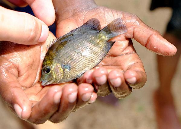 Название рыбы на удочку