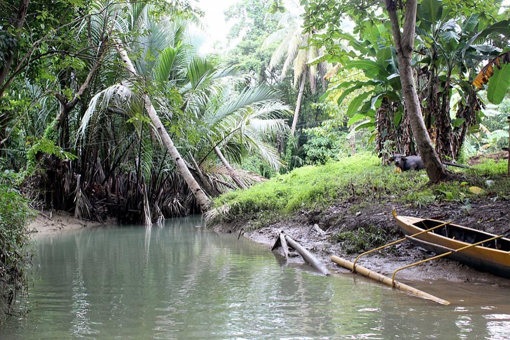 Исследованный участок реки находился в непосредственной близости от деревни, поэтому по берегам преобладают в основном культурные и сельскохозяйственные растения: банан, бамбук и др.