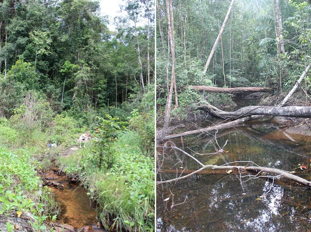Речки в центре острова на границе Национального парка (Phu Quoc National Park). Вдали от морского побережья аплохейлусы не встречаются, но ихтиофауна в этих местах не менее богата и интересна.