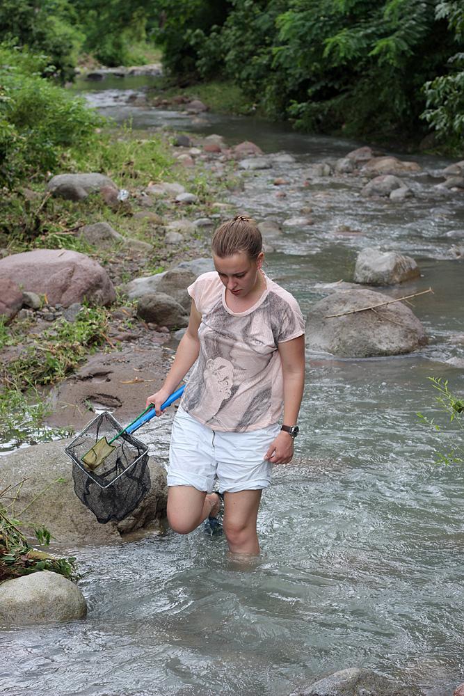 Поиск и поимка гидробионтов в быстрых тропических реках с мутной водой являются непростыми задачами. Чаще всего в таких случаях приходится действовать наугад, зачерпывать воду сачком у камней или коряг, уповая на удачу, что в сетке окажется что-нибудь интересное. Автор статьи в безымянной речке на острове Негрос (Филиппины).