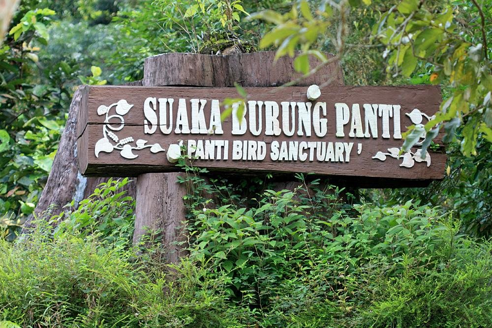 Дом птиц (Panti Bird Sanctuary) уже закрыт для посещения несколько лет. Тем не менее, лес заповедника до сих пор хранит множество тайн природы, одна из которых - криптокорины.