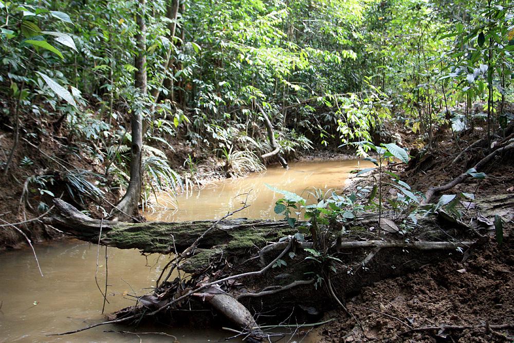 Небольшая лесная малазийская речка. Картинка наполнена краскам дикой природы и радует глаз, однако находится в этом месте человеку совершенно не комфортно. К сожалению, фотография не передает всю духоту окружающего перегретого влажного воздуха.