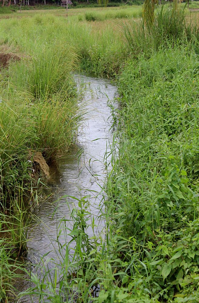 Небольшой ручей среди рисовых полей на филиппинском острове Бохоль (Bohol). Рядом с дорогой Lobok-Carmen