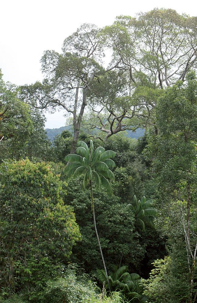 Туризм на вьетнамском острове Фукуок начал развиваться совсем недавно. До этого эта территория считалась природоохранной зоной, что позволило сохранить природу острова до наших дней.