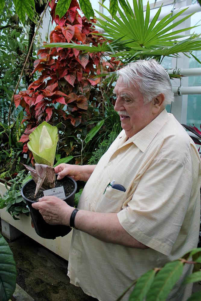 Йозеф Богнер (Josef Bogner) - известный немецкий ботаник, внесший огромный вклад в исследование и систематику растений семейства Ароидные (Araceae). Важно отметить, что особое внимание Богнер уделял именно околоводным и прибрежным растениям, из-за чего получил широкую известность среди аквариумистов. Данная фотография сделана в ботаническом саду Мюнхена, а в руках Богнер держит цветущий экземпляр аморфофаллуса Прайна (Amorphophallus prainii).