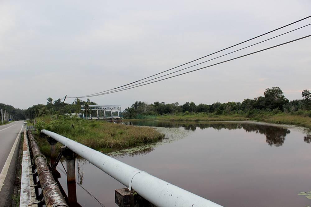 Sungai Gambul - приток реки Sedili Besar. Течение размеренное. В некоторых местах у бегов можно видеть отдельные небольшие кустики кувшинок (Nymphaea).
